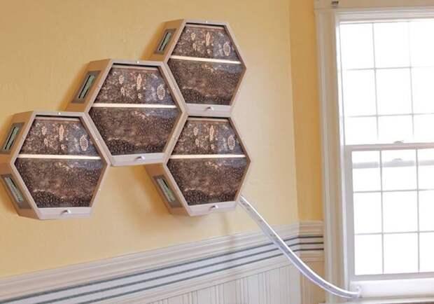 Одна компания придумала, как можно интегрировать пчелиные ульи в ваш домашний интерьер в мире, для дома, креатив, пчелы, улей, фантазия