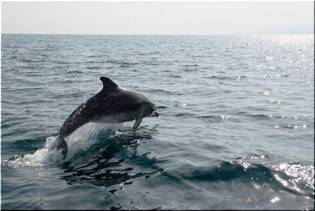 Впечатляющие итоги: «Роснефть» реализовала самые масштабные за постсоветский период исследования черноморских дельфинов