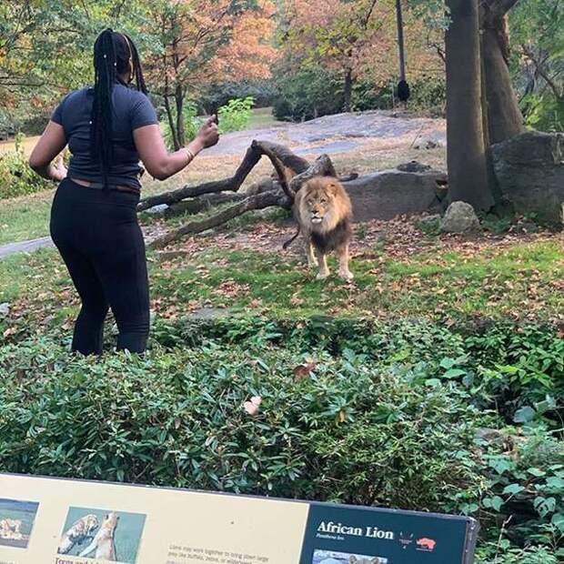 время туристка решила сфотографироваться поближе ко льву для