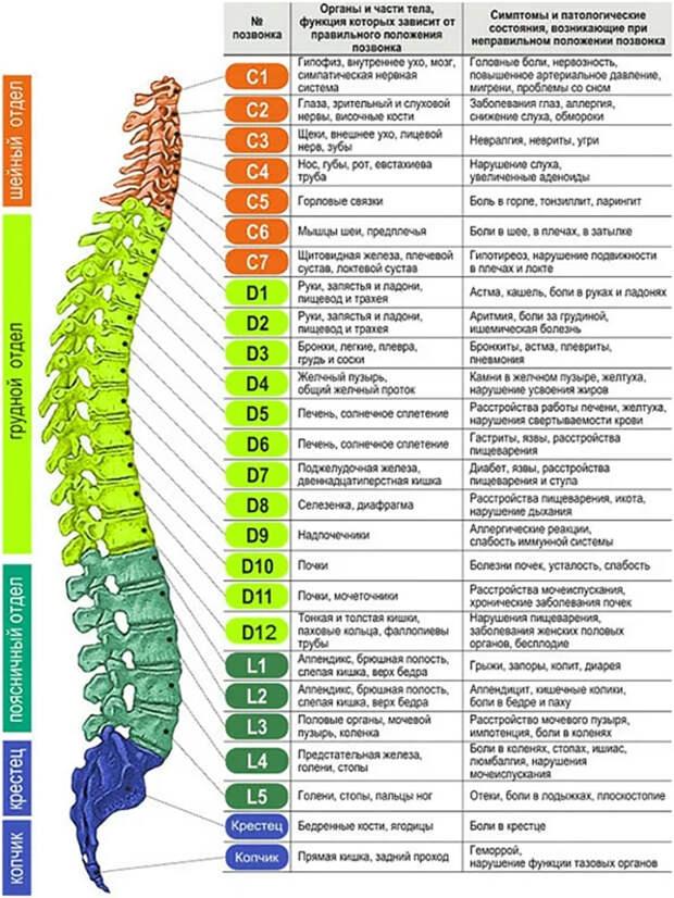Диагностика по позвоночнику: боли в спине укажут на проблемы с органами
