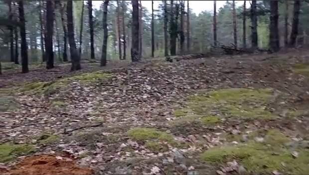 Обнаружена информация о 300 расстрелянных в годы Великой Отечественной войны возле д. Грабово.