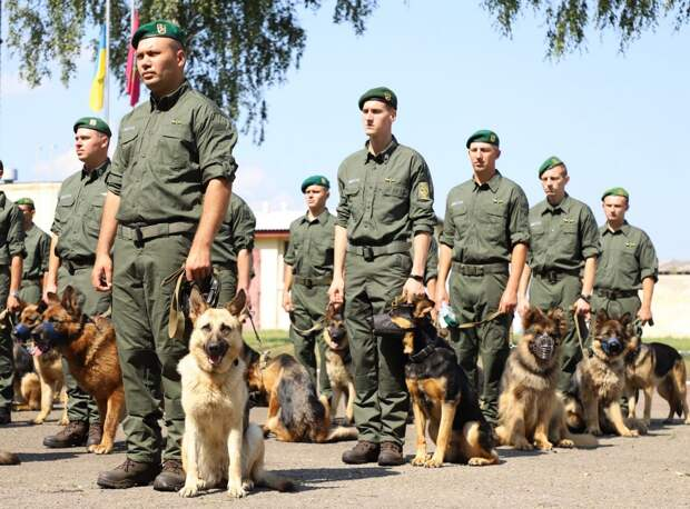 В День независимости в колонне военного парада впервые пройдут собаки