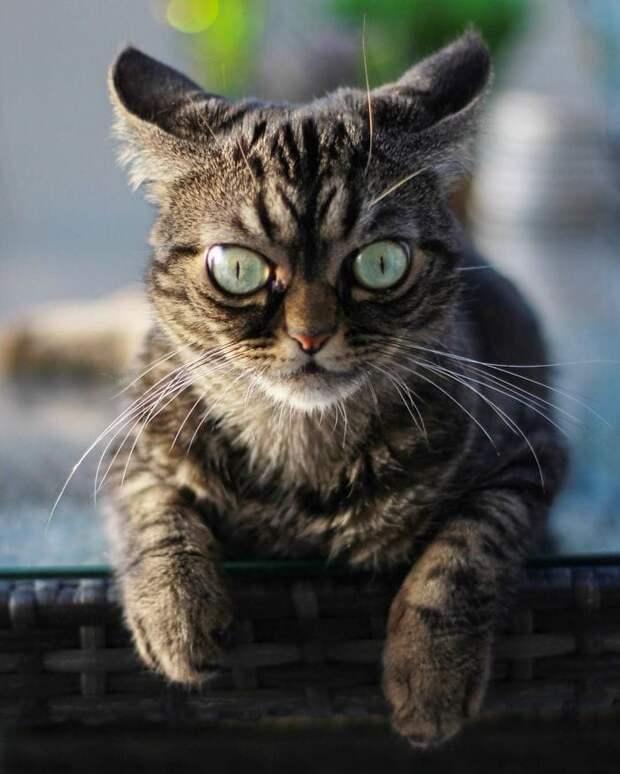 Кошки тоже бывают сварливыми, а еще злыми и милыми одновременно