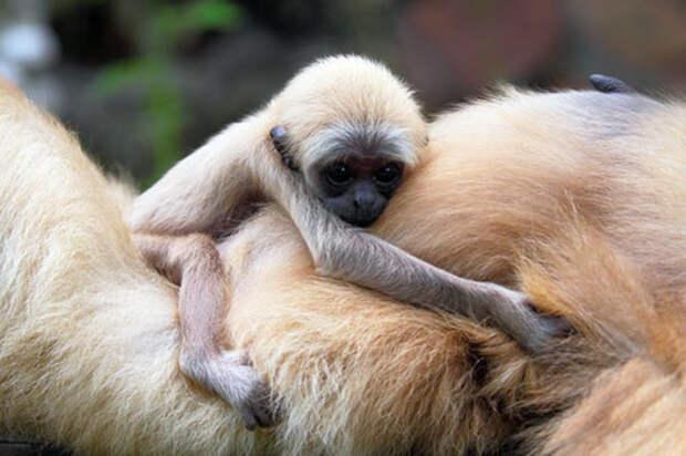 В Ленинградском зоопарке рассказали, как уберегают обезьян от коронавируса