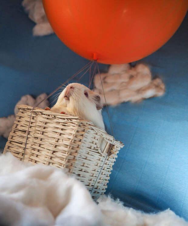 13 фотографий милых животных, спасённых из исследовательских лабораторий