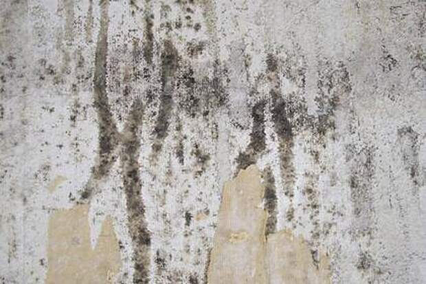 Эксперт объяснил, чем опасна плесень на стенах