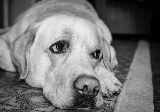 На полу, съёжившись, сидел пёс с грустными глазами. История спасения