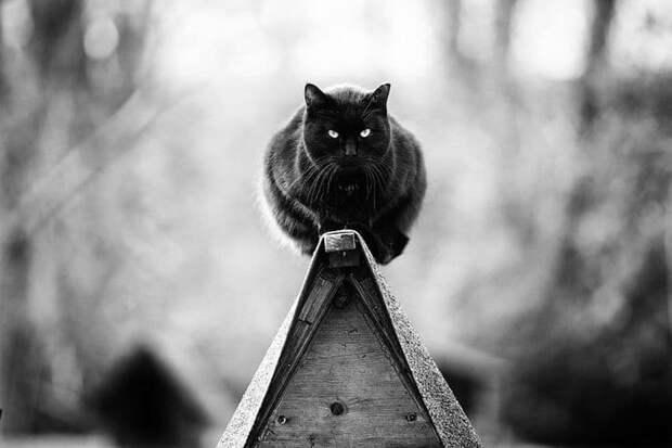 Без кота и жизнь не та: уравновешенные коты-акробаты демонстрируют чудеса баланса