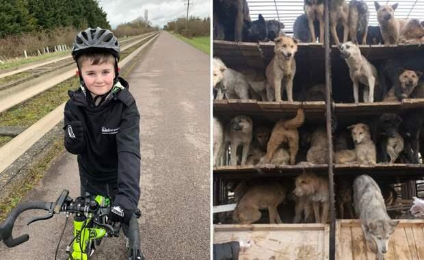 Мальчик неустанно крутил педали, чтобы спасти собак, рискующих стать обедом