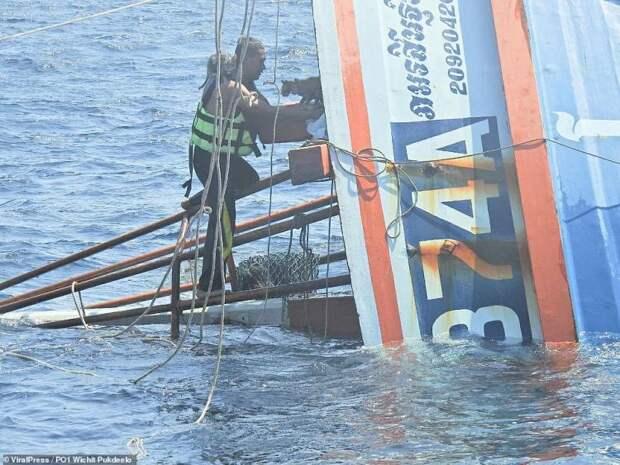 Героический пограничник спас кошек с тонущего корабля