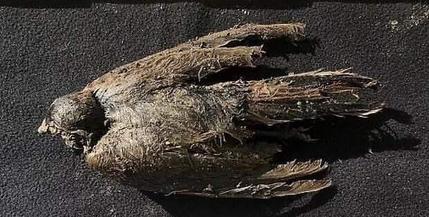 Охотники за ископаемыми нашли древнейшую птицу в мерзлоте