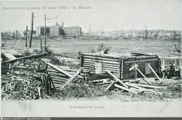 Анненгофская роща. 1904 год / Фото: pastvu.com