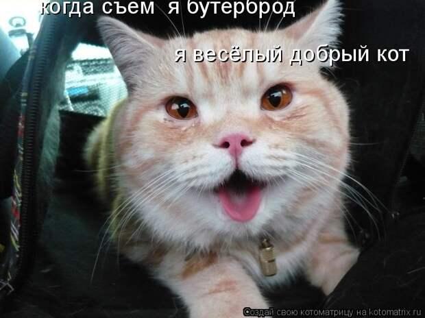 Забавные котики №7