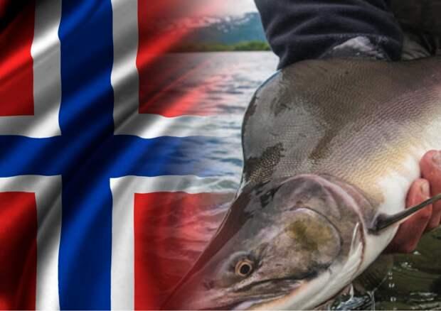 Вторжение русского лосося грозит Норвегии экономическим провалом