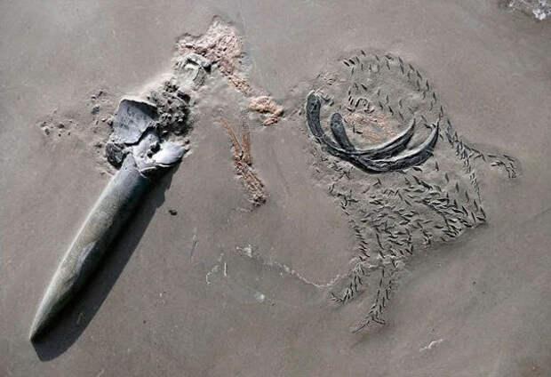 Доисторическая «матрешка»: рачок в кальмаре, кальмар в акуле