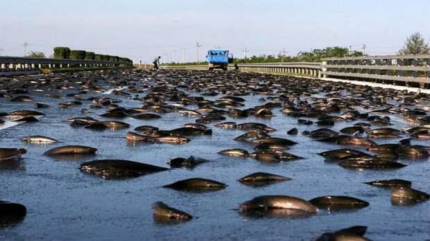 5 фото рыбного дождя в Гондурасе