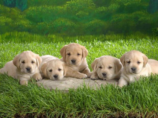 Маленький мальчик из всех щенков выбрал инвалида. Его причина очень трогательна!
