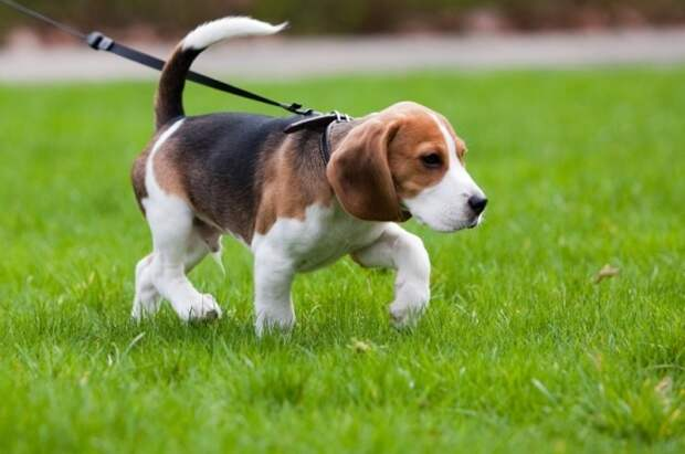 В правилах благоустройства Великого Новгорода пропишут, как выгуливать собак