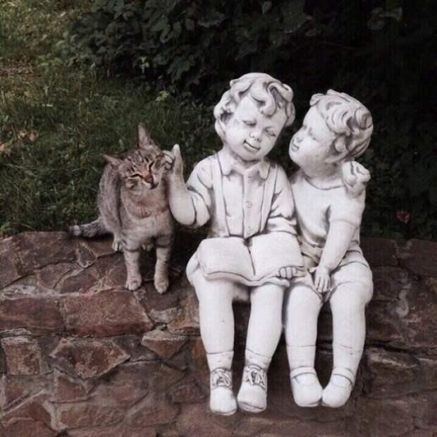 Такая возможность! животные, коты, смешные картинки, юмор