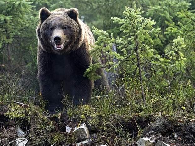 """Зоолог объяснил, почему медведь мог наброситься на людей в парке """"Ергаки"""""""