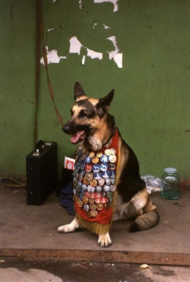 Собака с медалями в зоомагазине в Москве, 1989 год