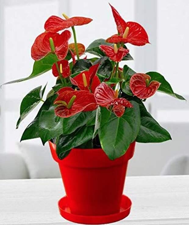 10 комнатных растений, которые несут счастье и тепло в ваш дом