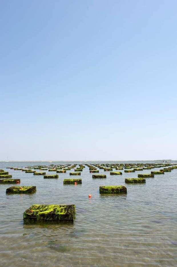 Как устроены фермы по выращиванию моллюсков