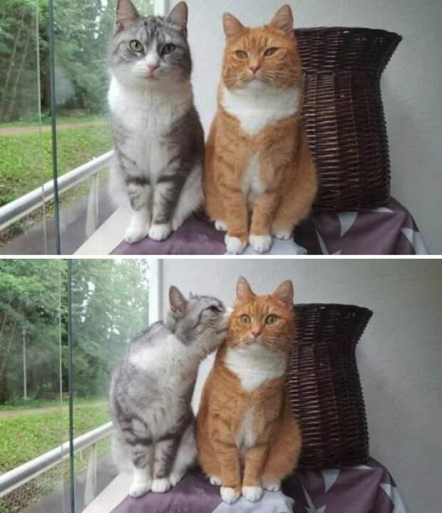 Неожиданный поцелуй животные, коты, смешные картинки, юмор