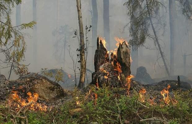 В Удмуртии ввели особый противопожарный режим в лесах