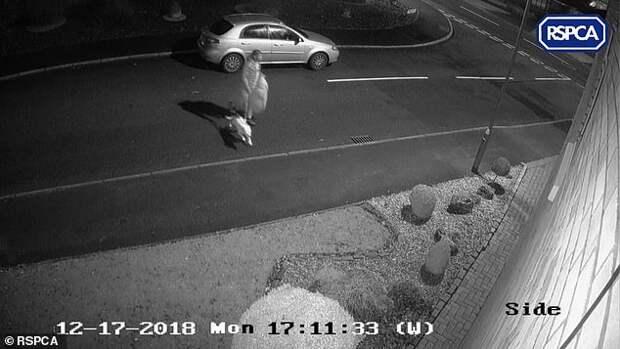 Он оставил собаку на обочине дороги. Она бежала за его машиной, сколько могла...