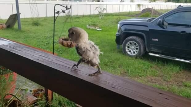 Видео: Попугай потерял все свои перья, но не унывает и здорово танцует под музыку