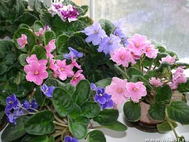 6 СОВЕТОВ, КАК ПРИВЛЕЧЬ В ДОМ СЧАСТЬЕ, ЛЮБОВЬ И ДОСТАТОК с помощью домашних растений!