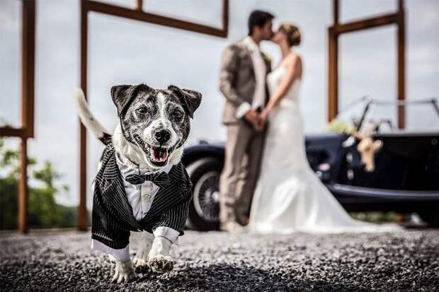 Животные умеют добавить искру в свадебные фото))