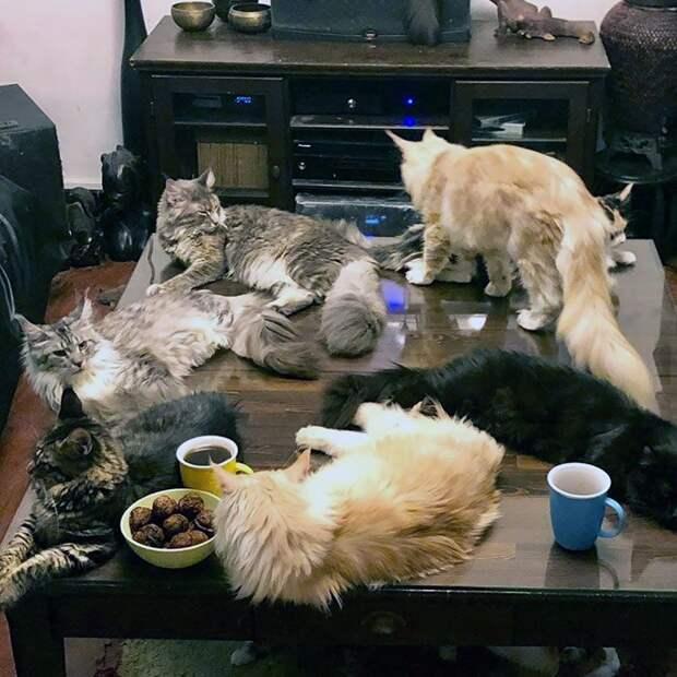 Откровения владельцев больших кошек