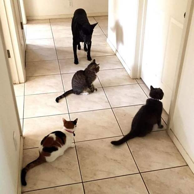 22. В ожидании хозяйки животные, жизнь, кот, питомец, семья, собака, фото