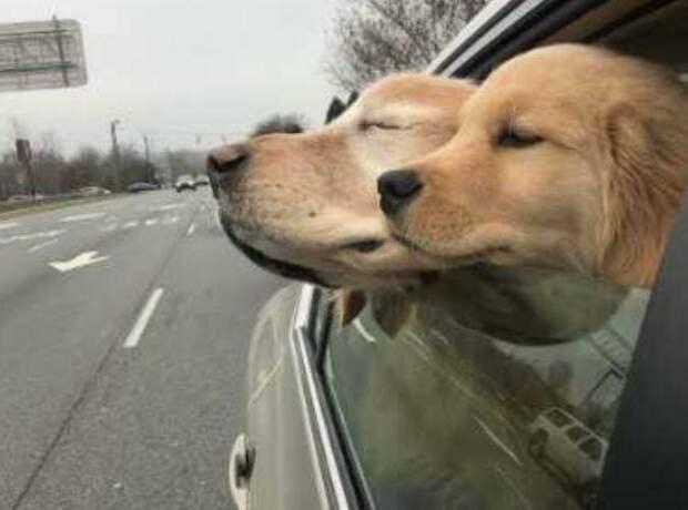 Лучшие друзья навсегда добро, друзья, животные, зрение, история, милота, собака