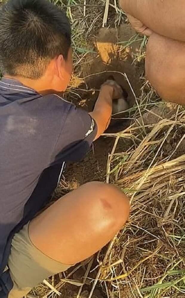 Из-под земли раздавался писк: в метровой яме, под слоем грязи и пыли, застрял крохотный щенок