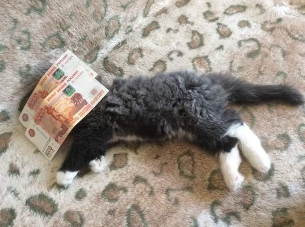 Друг забрал котёнка, попросил скинуть фотоотчёт, т.к. очень волновался за малого животные, кот, отдых