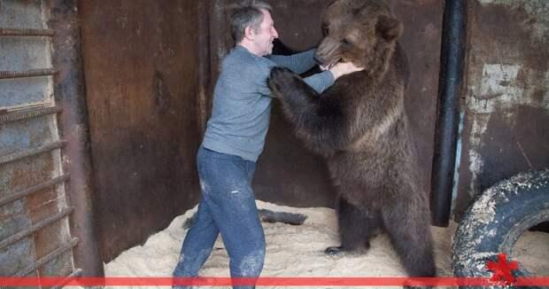 Правительство РФ утвердило список запрещенных к содержанию животных