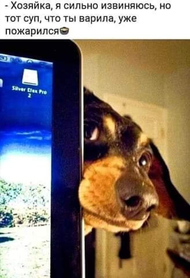 Возможно, это изображение (собака, экран, телефон и текст «-хозяйка, я сильно извиняюсь, Ho тот суп, что ты варила, уже пожарился Süver fes TO»)