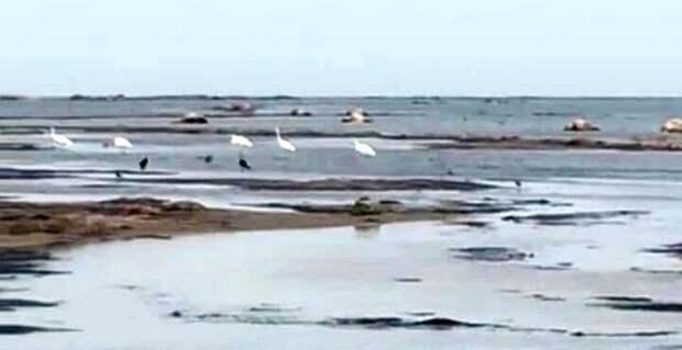 Массовая гибель верблюдов произошла в Мангистауской области