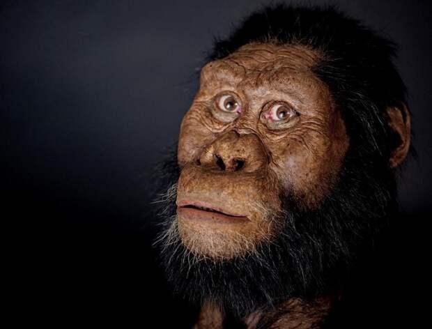 Реконструкция лица одного из первых предков человека, жившего на территории нынешней Эфиопии примерно 3,7 млн лет назад / Фото: newsbeezer.com