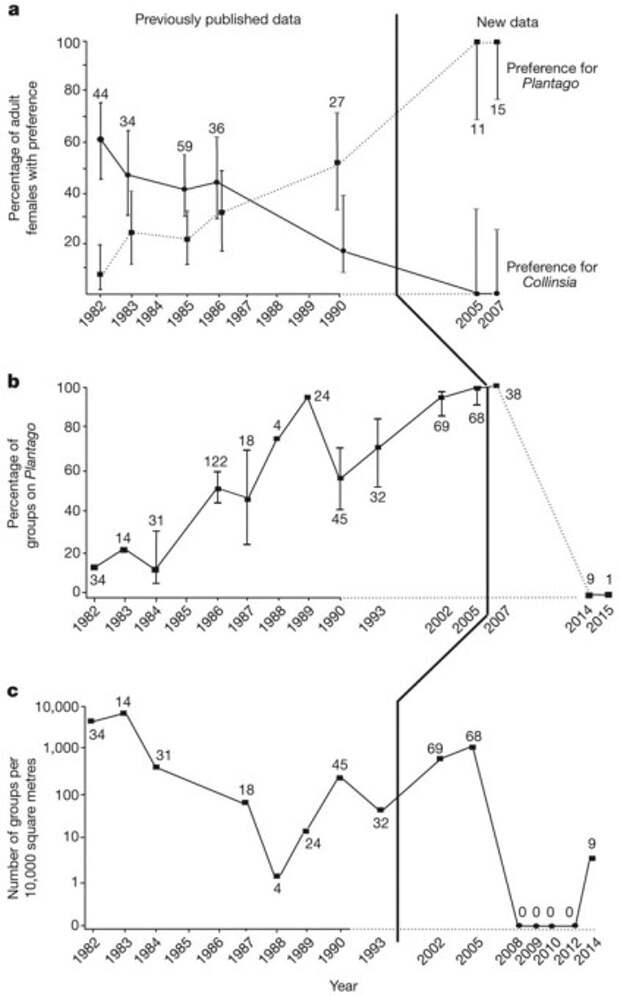 Рис. 2. Переход бабочек на новое кормовое растение и последующее вымирание популяции. По горизонтальной оси — годы. a — процент самок, предпочитающих подорожник (пунктир) и коллинсию (сплошная линия). Эти линии не являются зеркальными отражениями друг друга, потому что были еще и неразборчивые самки, откладывавшие яйца на оба растения. b — процент групп гусениц, встреченных на подорожнике. c — общее число групп гусениц на 10 000 кв м. Рисунок из обсуждаемой статьи в Nature