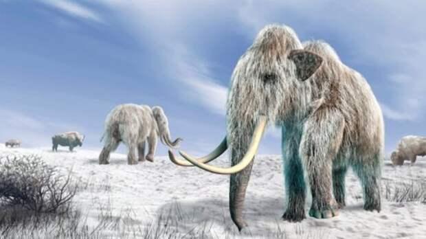 Оживить мамонтов