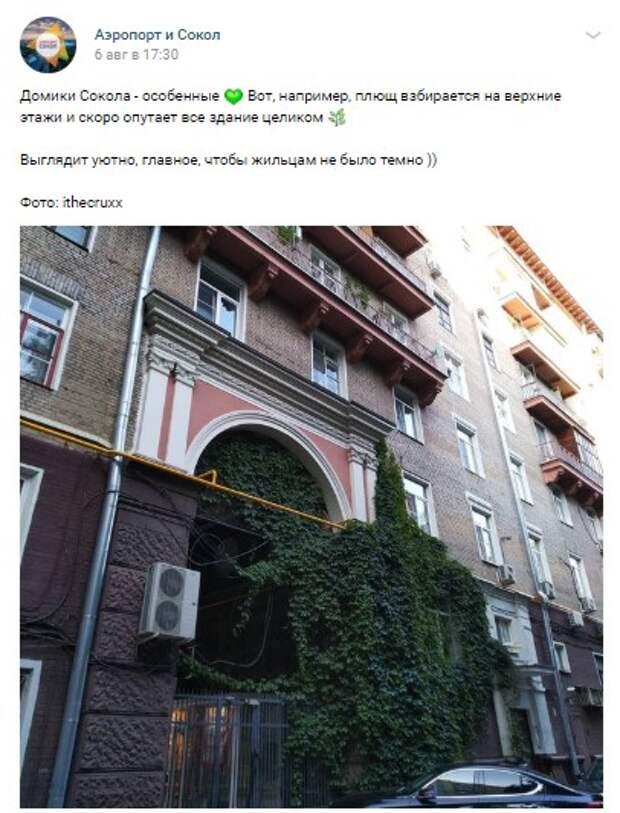Житель сфотографировал дом на Соколе, обвитый плющом