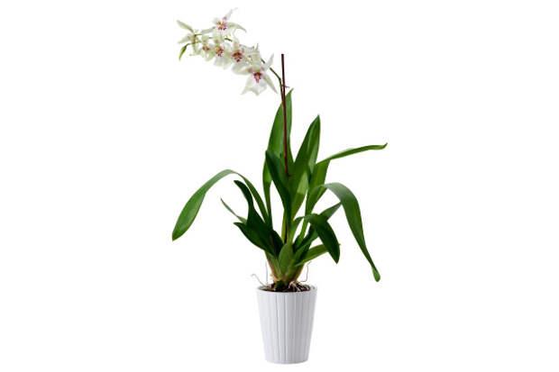 10 домашних растений, активно выделяющих кислород в ночное время