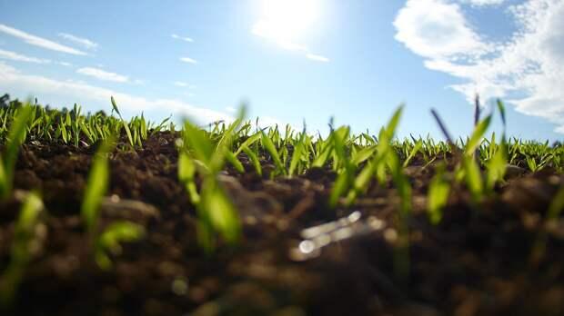 Трава, Сад, Зеленый, Садоводство, Наружные, Солнечный