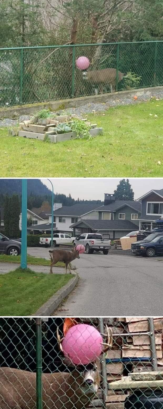 Люди делятся своими неудачными фотографиями дикой природы. И это весело