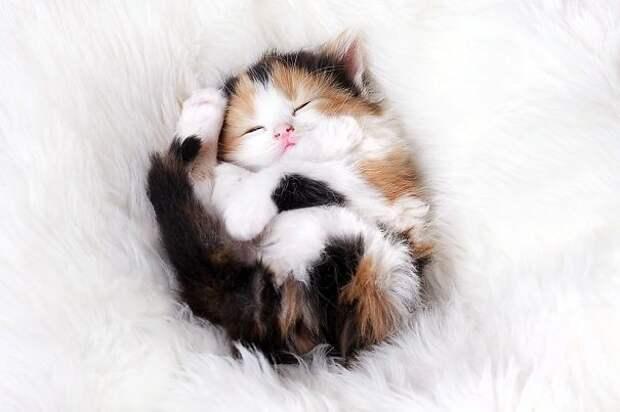 спящие котята, котята спят