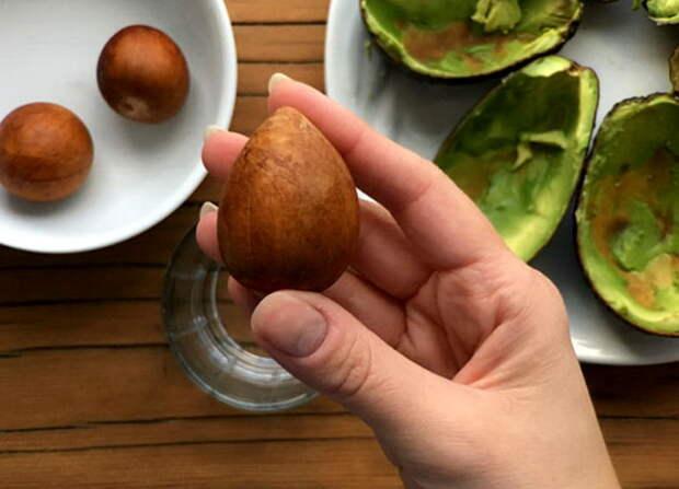 Картинки по запросу косточка авокадо